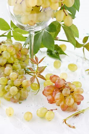 wine and young grape Stock Photo - 6491434