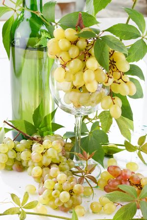 wine and young grape