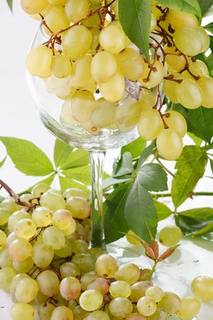 wine and young grape Stock Photo - 6491443