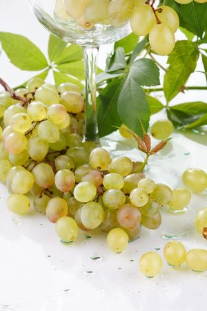 wine and young grape Stock Photo - 6491451