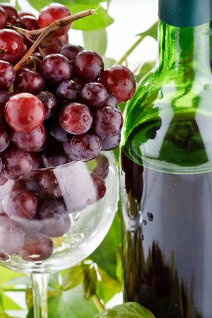 wine and young grape Stock Photo - 6491512