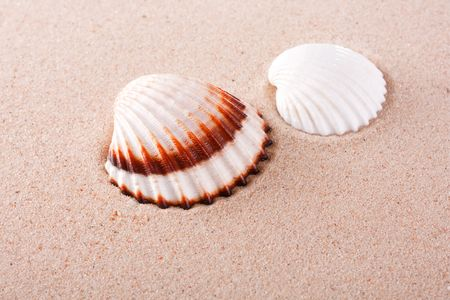 shells on sand Stock Photo - 6560249