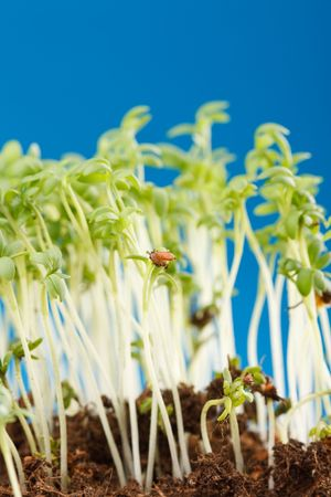 plant shoots Stock Photo - 6742587