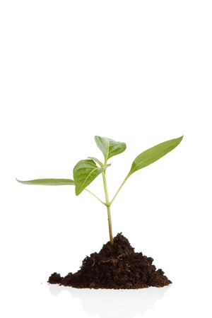 Young plant Stock Photo - 6742687