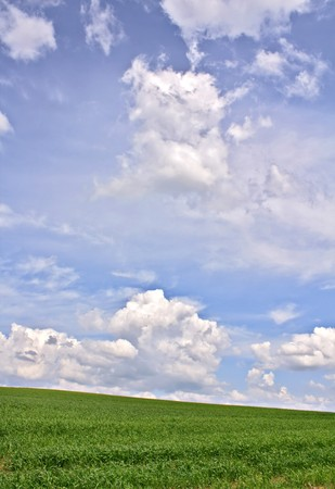 field of grass Stock Photo - 7207234
