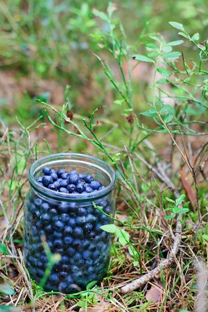 bilberries: bilberries in the jar