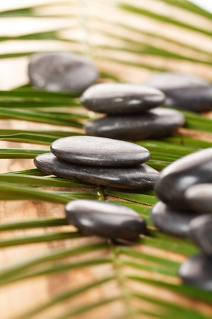 black stones and green leaf  photo
