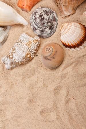 shells on the beach  photo