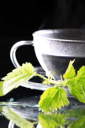 tea nettle  photo