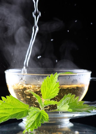 tea nettle  Stock Photo