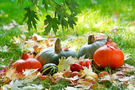 Harvested pumpkins with fall leaves  Stock Photo - 7991367