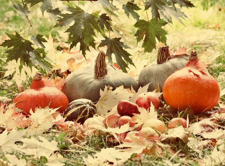Harvested pumpkins with fall leaves  photo