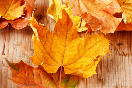 Dry leaves on the wood background photo