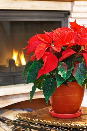 Fireplace and flower photo