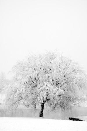 sauce: Parque de invierno en la nieve
