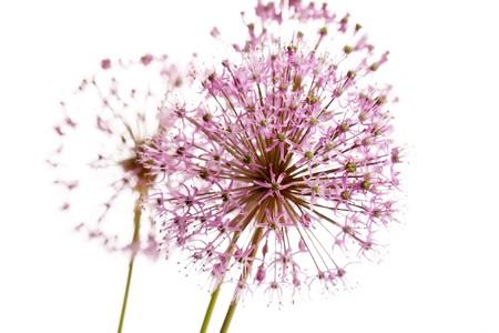 beautiful flowers Stock Photo - 8181796
