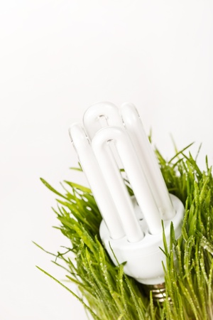 light bulb on a grass Stock Photo - 8236507