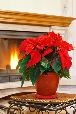 Fireplace and flower Stock Photo - 8237287