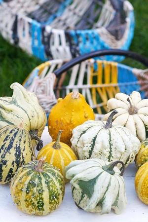 Colorful pumpkins collection photo