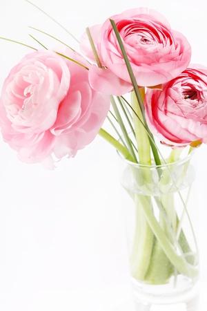 ranunculus: pink Ranunculus