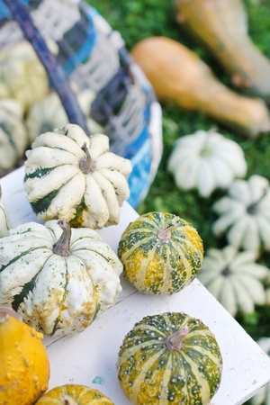 Colorful pumpkins collection photo