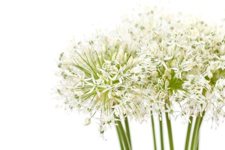 beautiful flowers Stock Photo - 9497916