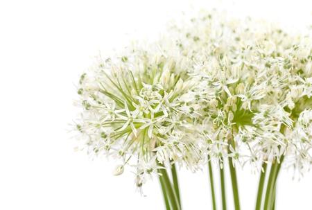 beautiful flowers Stock Photo - 9537433