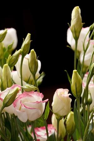 nice flowers Stock Photo - 9561999