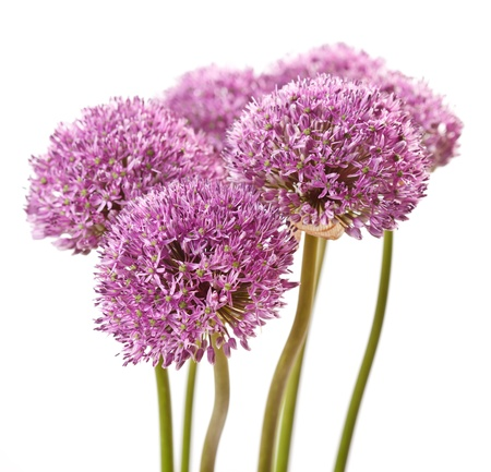 beautiful flowers Stock Photo - 9561897
