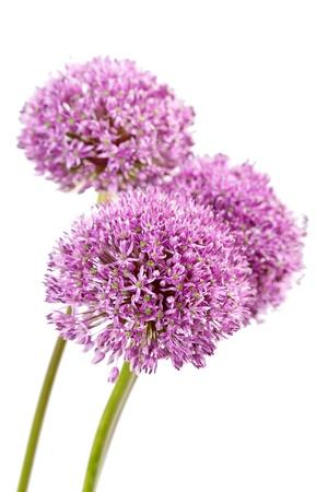 beautiful flowers Stock Photo - 9612303