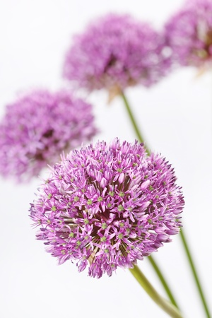 beautiful flowers Stock Photo - 9624808