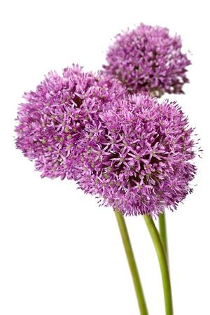 beautiful flowers  photo