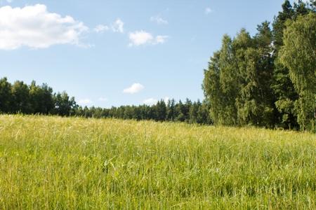 field of wheat  Stock Photo - 9976351