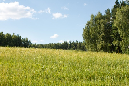 gramineous: field of wheat