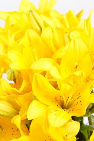 loveliness: Beautiful lilies Stock Photo