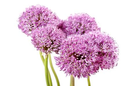 chive: beautiful flowers