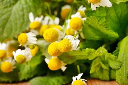 Chamomiles and mint photo