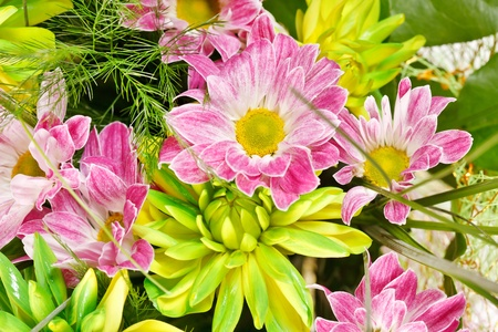 bouquet of colorful flowers Stock Photo - 10602124
