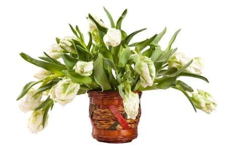 white tulips Stock Photo - 10946701