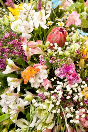bouquet of colorful flowers Stock Photo - 10976107