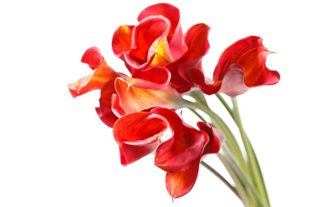 beautiful flowers Stock Photo - 11002541