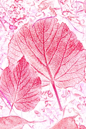 fall leaves Stock Photo - 11301726