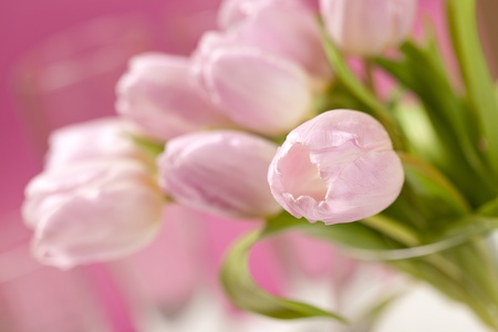pink tulips in the vase photo