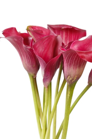 easter lily: beautiful flowers Stock Photo
