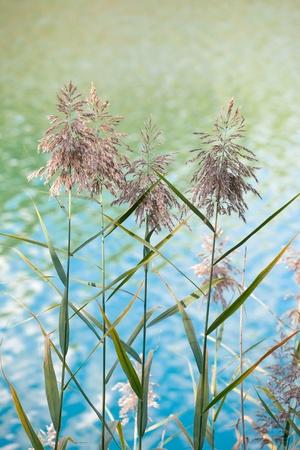 nice plants near river photo