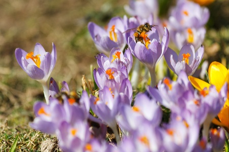 rich spring flowers Stock Photo - 13053669