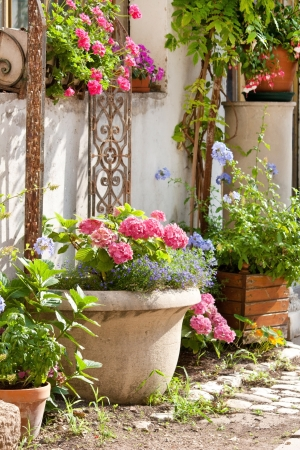 nice yard with flowers photo