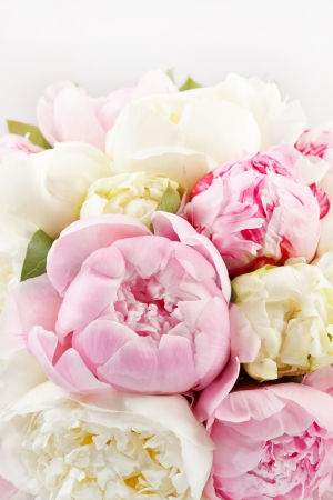 Rich bunch of peonies photo