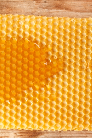 fresh honey in comb  photo