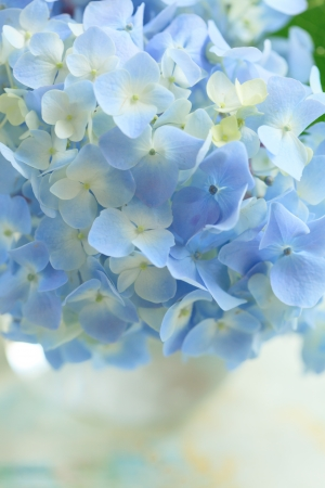 blue flower in vase Stock Photo - 14468774